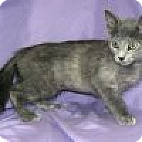 Adopt A Pet :: Galaxy - Powell, OH