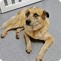 Adopt A Pet :: Ben - Brooklyn, NY