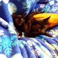 Adopt A Pet :: Heckle & Jeckle - Delmont, PA