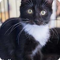 Adopt A Pet :: Sparta - Merrifield, VA