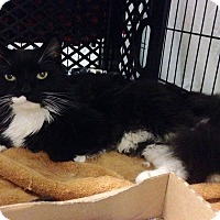 Adopt A Pet :: Boots - East Brunswick, NJ