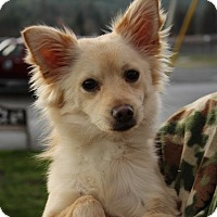 Adopt A Pet :: Chewie - Grants Pass, OR