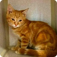 Adopt A Pet :: MIMOSA - Canfield, OH