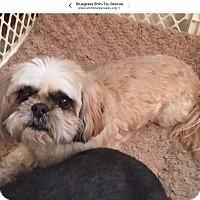 Adopt A Pet :: Bear & Max-bonded pair - LEXINGTON, KY