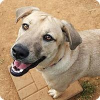 Adopt A Pet :: Charlie - Scottsboro, AL