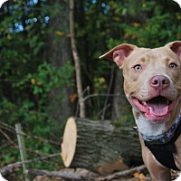 Adopt A Pet :: Ruby - New Castle, PA