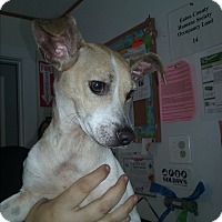 Terrier (Unknown Type, Small) Mix Dog for adoption in Olivet, Michigan - Todd