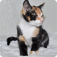 Adopt A Pet :: Chelsea - Lincoln, CA
