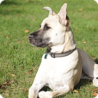 Adopt A Pet :: Bronson - West Hartford, CT