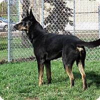 Adopt A Pet :: Joey - Van Wert, OH