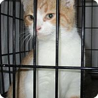 Adopt A Pet :: STRAPS - detroit, MI