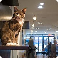Adopt A Pet :: Baz - New York, NY