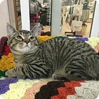 Adopt A Pet :: Toby Kitten - Harrisburg, PA