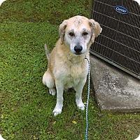 Adopt A Pet :: Bo - Denham Springs, LA