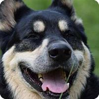 Adopt A Pet :: COURTESY POST: Boss - Brooklyn, NY