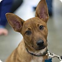 Adopt A Pet :: Theo - Minneapolis, MN