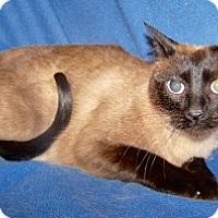 Adopt A Pet :: Tula - Colorado Springs, CO
