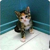 Adopt A Pet :: Macy - Irvine, CA