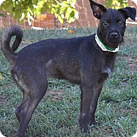 Adopt A Pet :: Alli May - Simi Valley, CA