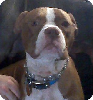 Boxer Mix Dog for adoption in Tyler, Texas - KP-Ruby