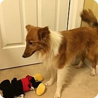 Adopt A Pet :: Leo - Charlottesville, VA