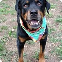 Adopt A Pet :: KOTA - Albany, NY