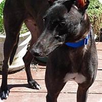 Adopt A Pet :: Wyatt - Spencerville, MD