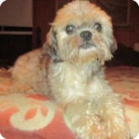 Adopt A Pet :: MIKIMOTO BARKLEY - Waldron, AR