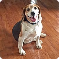 Adopt A Pet :: Thomas - Marietta, GA