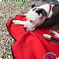Adopt A Pet :: Money - Middlebury, CT