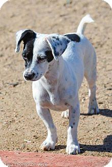 Dachshund Mix Dog for adoption in Anaheim, California - Pixie