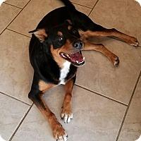 Adopt A Pet :: Robbie - Phoenix, AZ