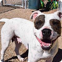 Adopt A Pet :: Breezy - Sierra Vista, AZ