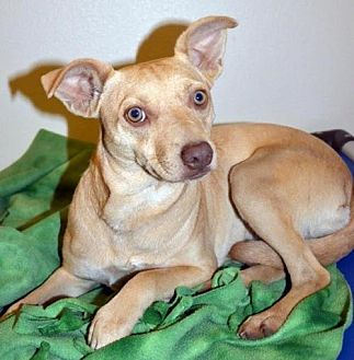 Terrier (Unknown Type, Medium) Mix Dog for adoption in Arlington, Washington - Sierra, a 11 month old Pup
