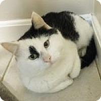 Adopt A Pet :: Oreo - Medford, MA