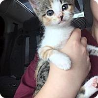 Adopt A Pet :: Skittles - Santa Fe, TX