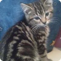 Adopt A Pet :: Jasmine - Greensburg, PA