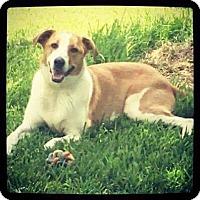 Adopt A Pet :: Rocky - Albertville, MN
