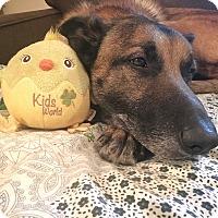 Adopt A Pet :: Bear - Staunton, VA