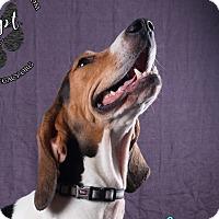 Adopt A Pet :: June - Cincinnati, OH