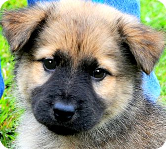 CHARMIN(ADORABLE FLUFFY PUPPY! | Adopted Puppy | Wakefield ...