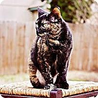 Adopt A Pet :: Violet - San Antonio, TX