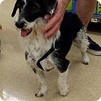 Adopt A Pet :: Maggie - Silsbee, TX