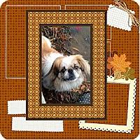 Adopt A Pet :: Max - Portland, ME