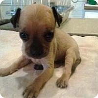 Adopt A Pet :: Gina - Phoenix, AZ
