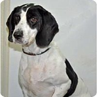 Adopt A Pet :: Dottie - Port Washington, NY