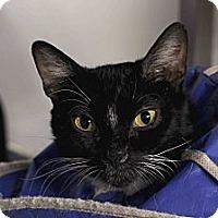 Adopt A Pet :: Rosalba - Chicago, IL