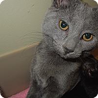 Adopt A Pet :: Jessica - Medina, OH