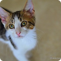 Adopt A Pet :: Starr - Island Park, NY