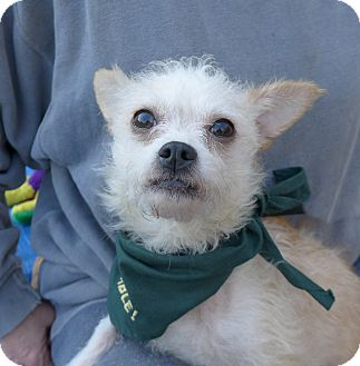 Small Dogs Up For Adoption In Nc